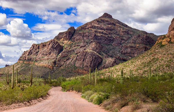 Ajo Mountain Road