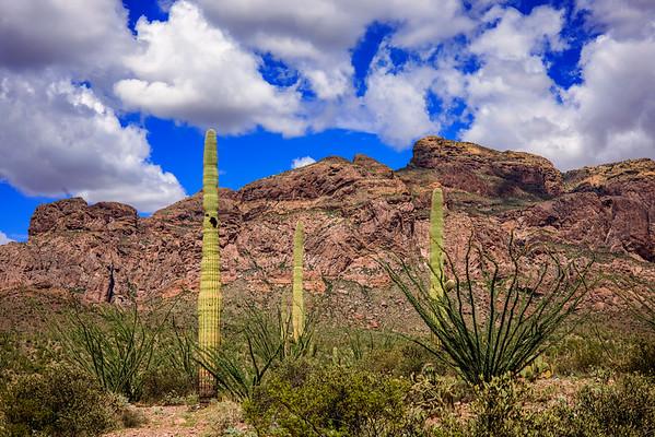 Lush Desert Below the Rock Mountain