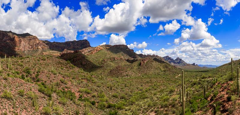 A Green Cactus Basin