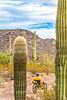 Organ Pipe Cactus National Monument - D1-C1-0109 - 72 ppi