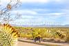 Organ Pipe National Monument in Arizona - C3-0211 - 72 ppi