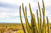 Organ Pipe National Monument in Arizona - C3-0140 - 72 ppi