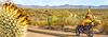 Organ Pipe National Monument in Arizona - C3-0209 - 72 ppi-2