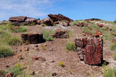 Petrified Forest National Park, Arizona, September 2012.