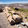 Crystal Forest, Petrified Forest National Park, Arizona, September 2012.