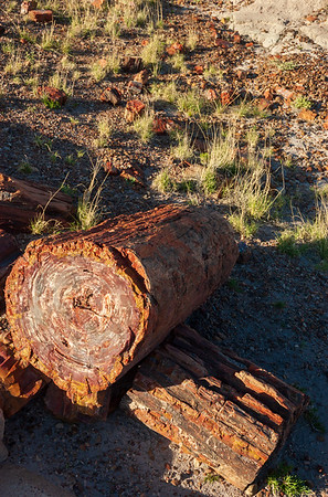 Colorful Petrified Log at Petrified Forest National Park