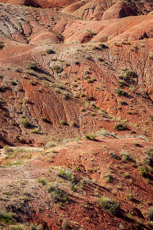 The Red Painted Hills of Petrified Forest National Park