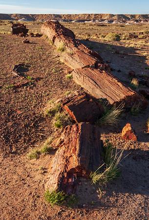 Petrified Log at Petrified Forest National Park