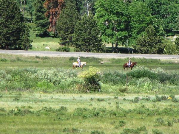 Horses nearby Sheep Lakes