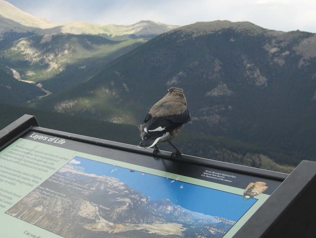 July 2008 - GMA's first trip to RMNP - views from Trail Ridge Drive - our little friend is adoring the view too!