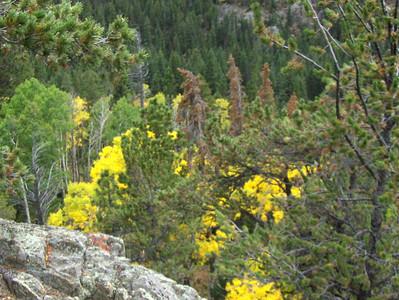 10-04-2008 - RMNP; closeup of fall colors