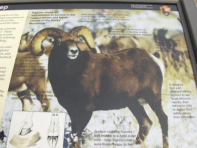 10-04-2008 - RMNP; Big Horn Sheep sign at Sheeps Lake