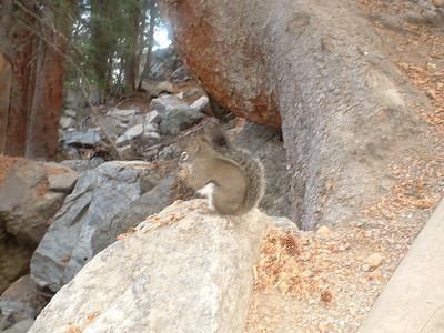 October 2007 - a mountain squirrel at Bear Lake
