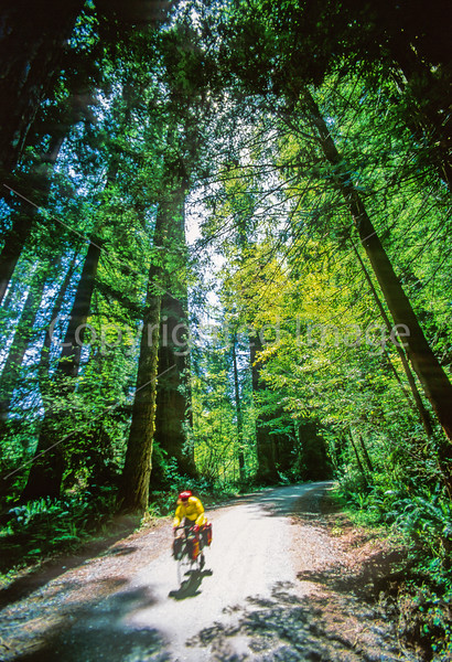 Cyclist at California's Redwood National Park - 2-2 - 72 ppi