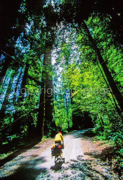 Cyclist at California's Redwood National Park - 1-2-1 - 72 ppi