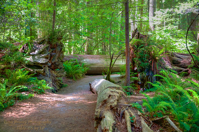 RN&SP-180627-0010 Trail in Jedediah Smith Redwood State Park