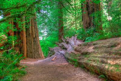 RN&SP-180627-0008 A fallen Redwood tree along the trail