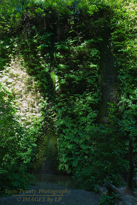 RN&SP-180626-0011 Fern covered canyon wall almost hides the waterfall