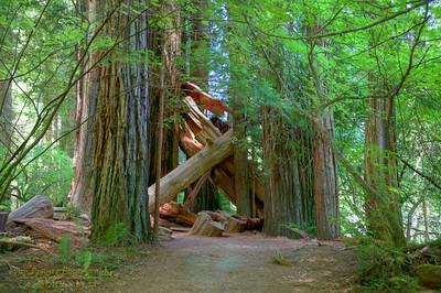 RN&SP-180627-0005 Fallen trees cross the trail
