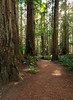 Redwood National and State Parks