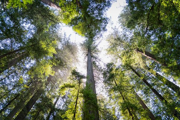 Humboldt Redwoods-15