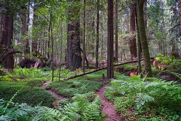Humboldt Redwoods-6