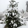 Christmas Tree?  :-)