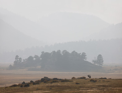 Elk Bugling in the Smoke, Rocky Mountain National Park