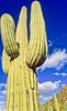 Saguaro National Park, Arizona - 36 - 72 ppi