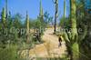 Biker on Hohokam Rd , west side of Saguaro NP in AZ - 16 - 72 ppi