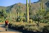 Biker on Hohokam Rd , west side of Saguaro NP in AZ - 19 - 72 ppi