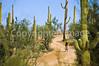 Biker on Hohokam Rd , west side of Saguaro NP in AZ - 44-Edit - 72 ppi