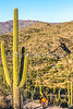 Saguaro National Park - C2-0077 - 72 ppi-2