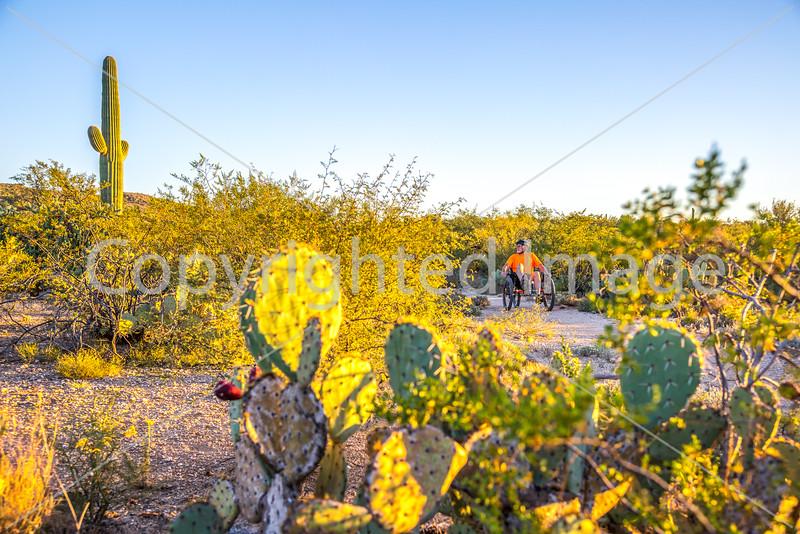 Sunset on mountain bike trail at Saguaro Nat'l Park - C3-0016 - 72 ppi