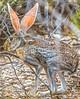Saguaro National Park - C1-0237 - 72 ppi-3