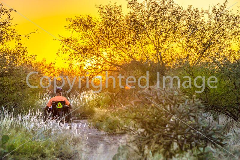 Saguaro National Park - C1-0378 - 72 ppi