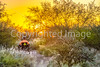 Saguaro National Park - C1-0378 - 72 ppi
