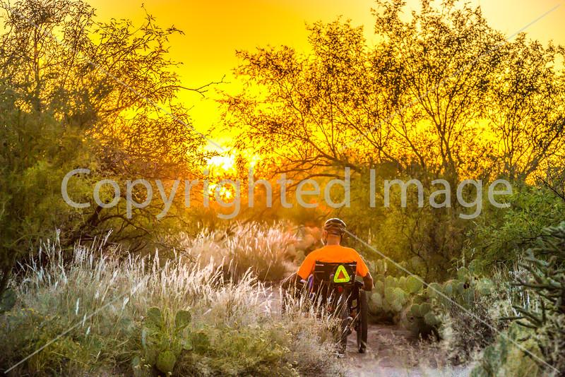 Saguaro National Park - C1-0373 - 72 ppi