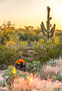 Saguaro National Park, Cactus Forest Trail - C1-0347 - 72 ppi