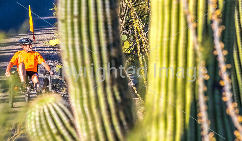Saguaro National Park - C2-0020 - 72 ppi-4