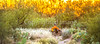 Saguaro National Park - C1-0426 - 72 ppi-2