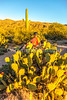 Saguaro National Park - C3-0034 - 72 ppi