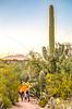 Sunset on mountain bike trail at Saguaro Nat'l Park - C3-0078 - 72 ppi-2