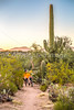 Sunset on mountain bike trail at Saguaro Nat'l Park - C3-0078 - 72 ppi