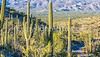 Saguaro National Park - C2-0048 - 72 ppi