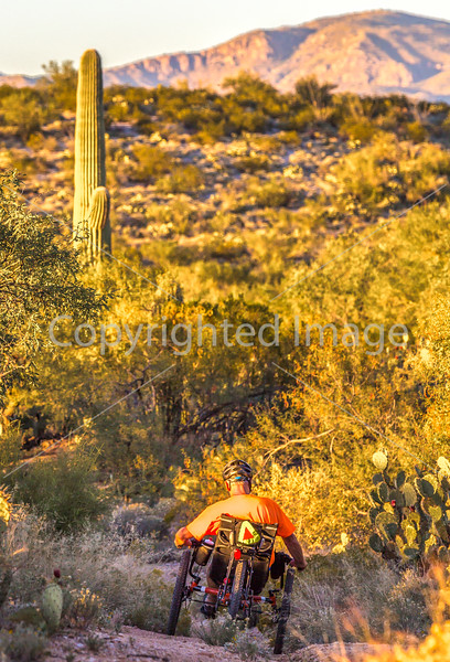Saguaro National Park - C1-0186 - 72 ppi