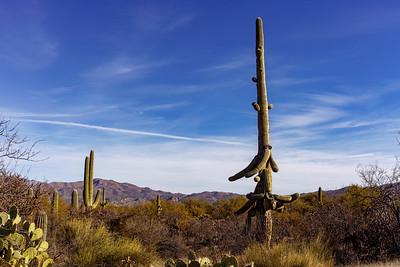 Saguaro Swish