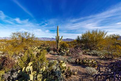 This Saguaro Is Proud Of Its Cactus Garden