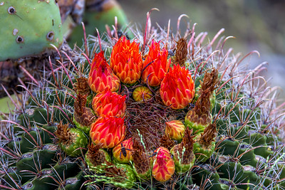Blazing On The Cactus