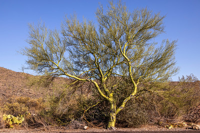 Ways To Green Up Your Desert